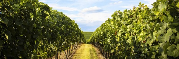 Why to buy Austrian wines from us?